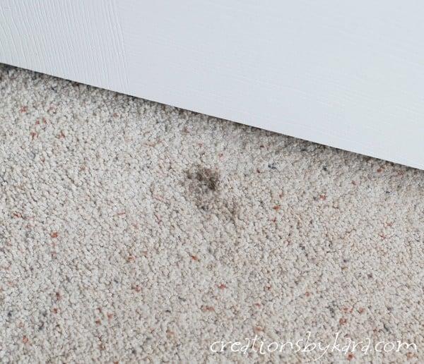 carpet-spot-remover