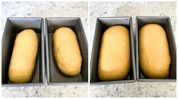 loaves of oatmeal bread dough rising in pans